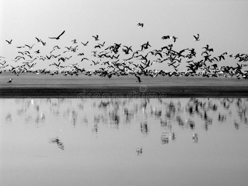 Seagulls στην παραλία σε γραπτό στοκ εικόνα