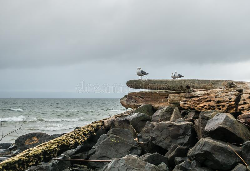 Seagulls στο κούτσουρο στοκ εικόνα με δικαίωμα ελεύθερης χρήσης