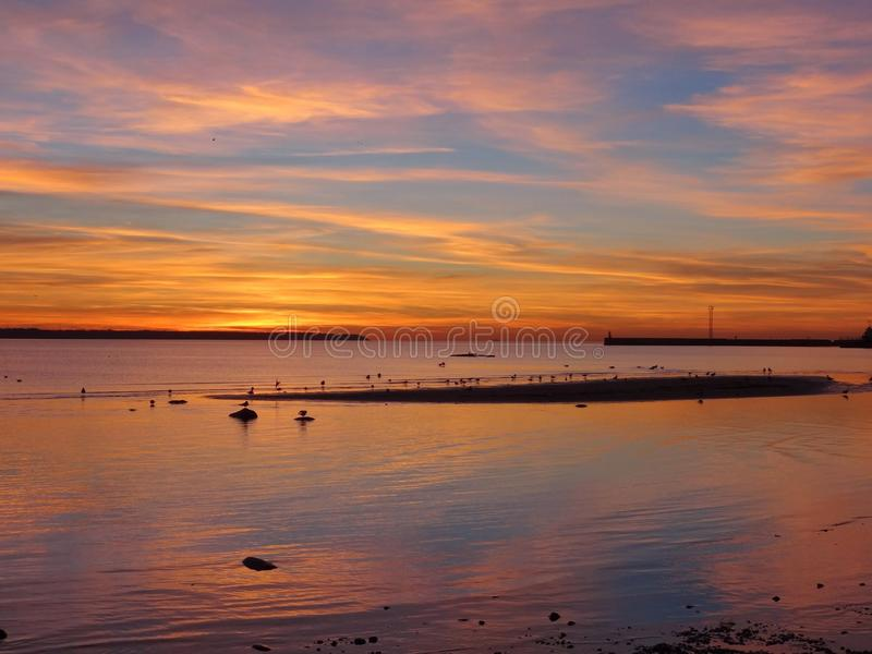 Seagulls στο iseland και στο κάψιμο του ουρανού σε Talin στην Εσθονία στοκ φωτογραφίες