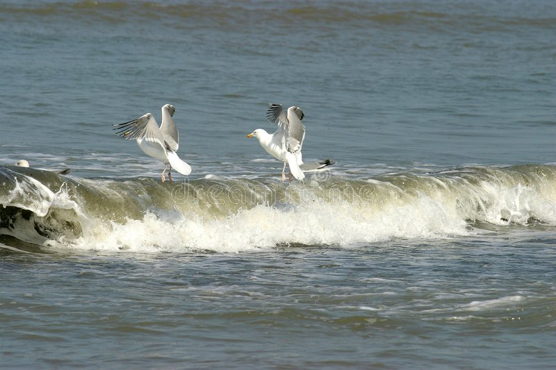Download Seagulls stock photo. Image of banks, waves, wings, bird - 103190
