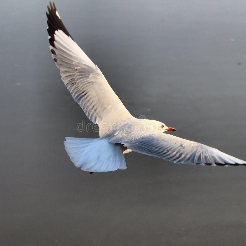 seagulls fotografia royalty free