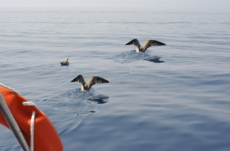 Download Seagulls stock image. Image of animal, skim, coastline - 11055017