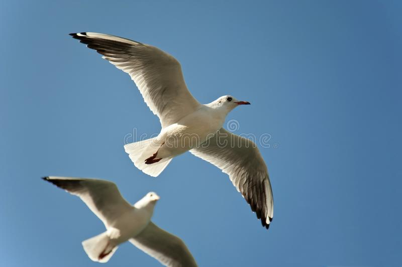 Download Seagulls Royalty Free Stock Photo - Image: 11214765