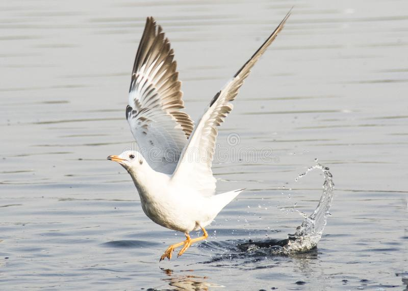 Seagulls!! royaltyfri fotografi