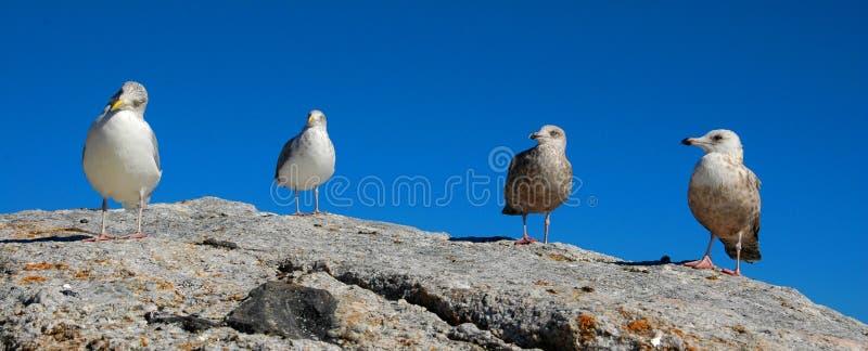 Download Seagulls stock image. Image of bird, seagulls, coast, wildlife - 1422487