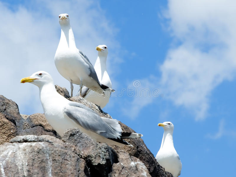 Download Seagulls stock image. Image of cloud, seagull, marine - 14817699