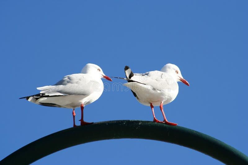 Download Seagulls stock photo. Image of beach, ocean, serene, blue - 154460