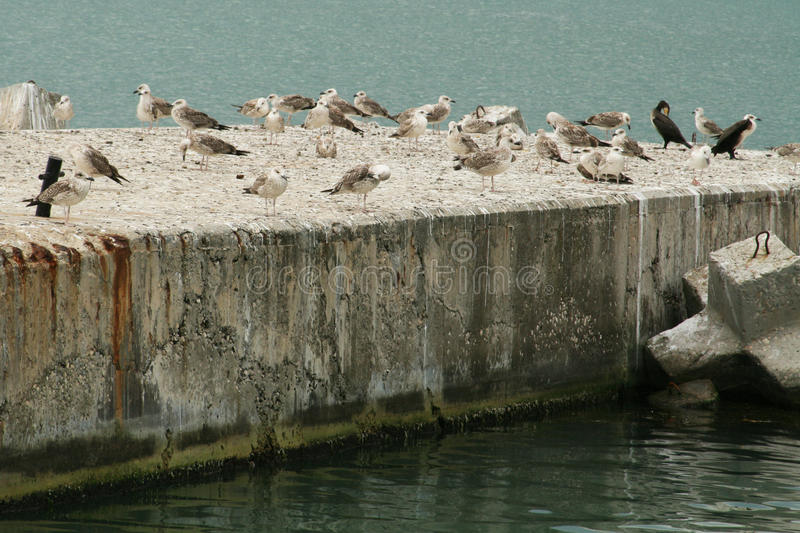 Seagulls. Sea birds on the stone mooring royalty free stock images