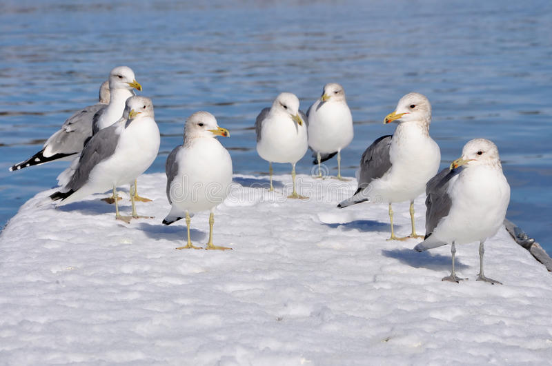 Download Seagulls stock image. Image of look, seagulls, nature - 18445625