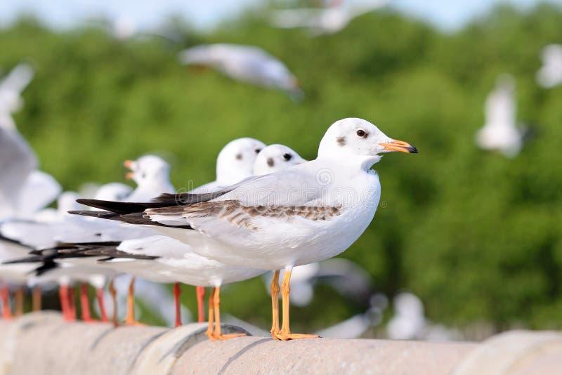 seagulls zdjęcia stock