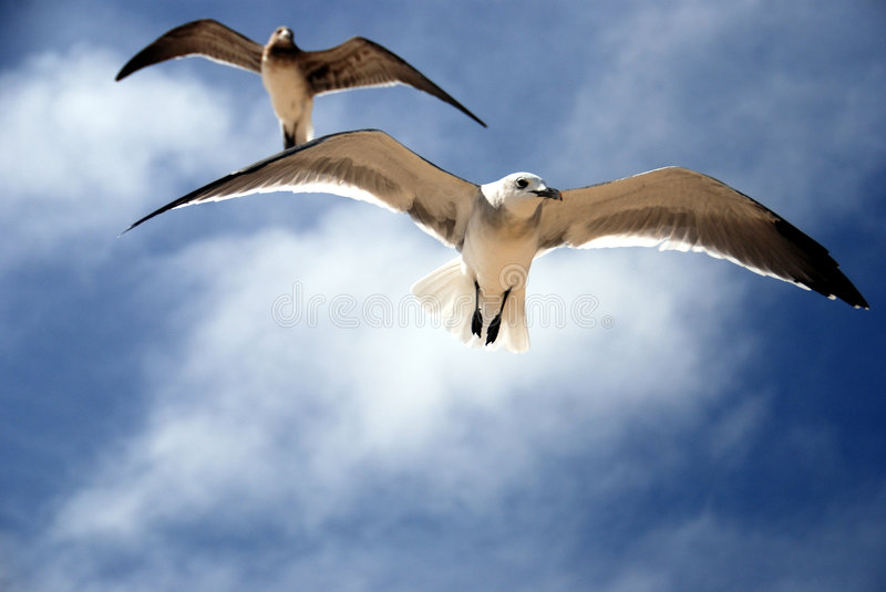 Seagulls stock photos