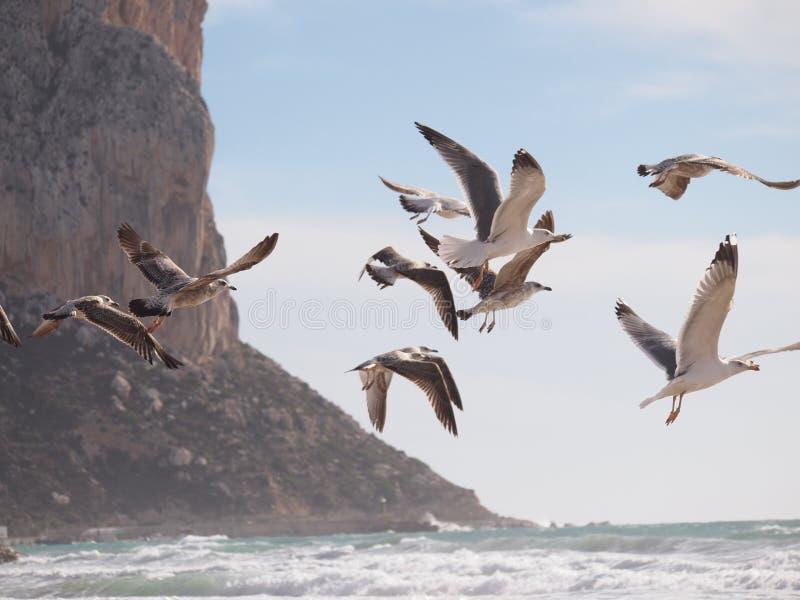 seagulls obrazy royalty free