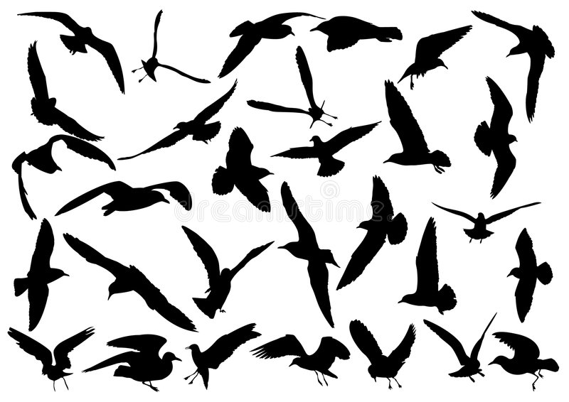 Download Seagulls stock vector. Image of bird, fauna, nature, albatross - 5569072