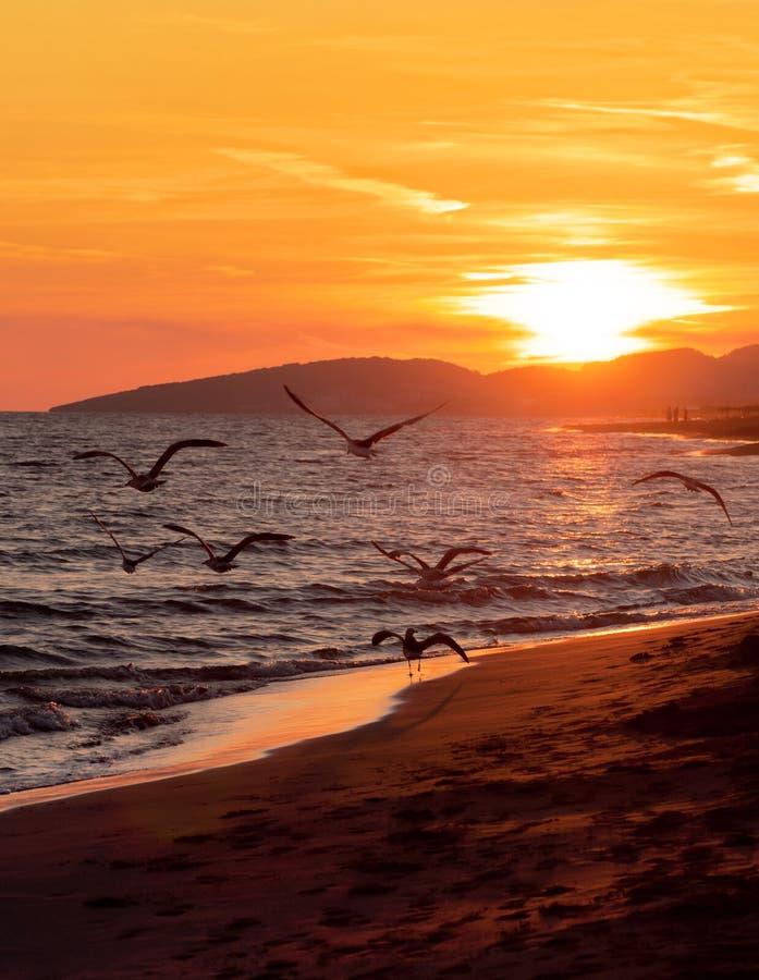 Seagulls against orange sky stock photo
