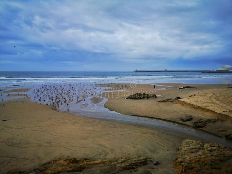 The seagulls with the arrival of autumn stock photography