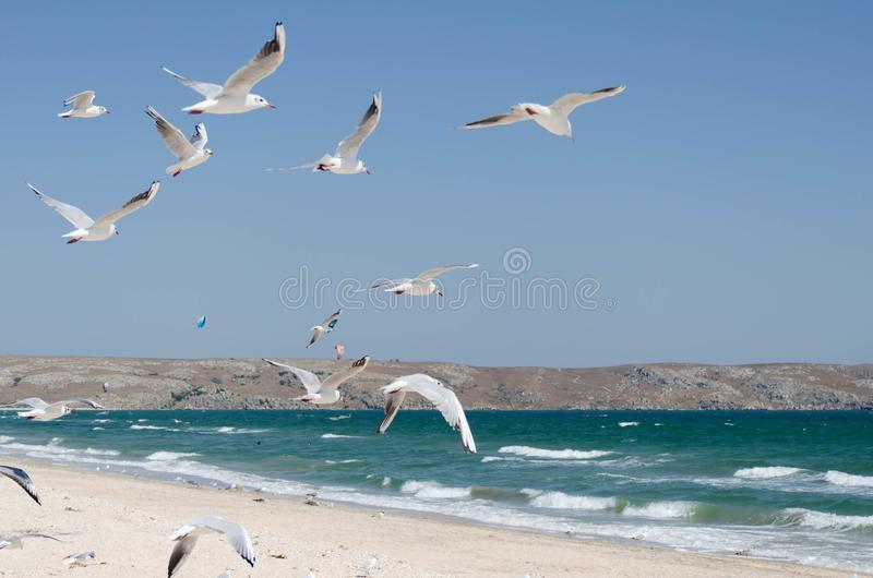 The seagulls on the background of a marine landscape stock photos