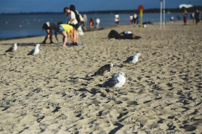 Seagulls on the beach royalty free stock photography