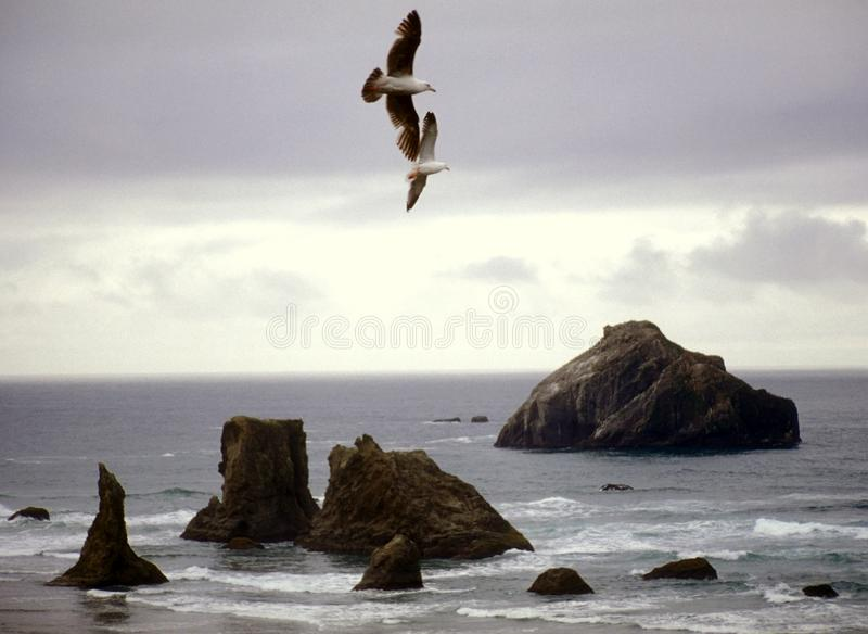 Download Seagulls and Beach stock photo. Image of atlantic, details - 11750134