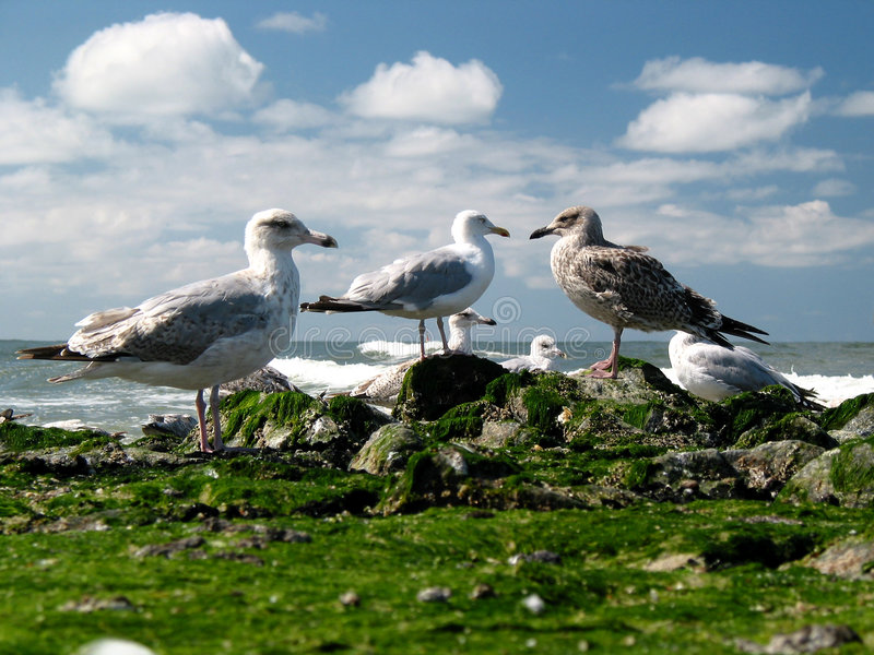 Download Seagulls on the beach stock image. Image of beach, watching - 137035