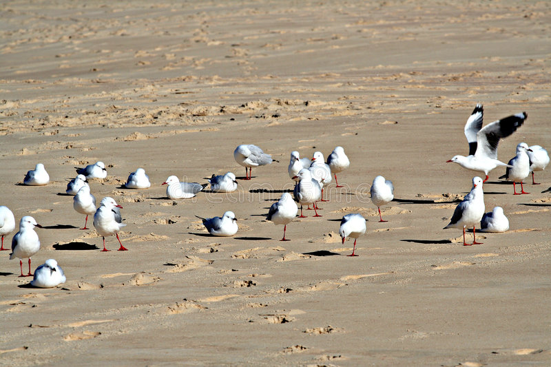 Download Seagulls on the beach stock photo. Image of group, rest - 984004