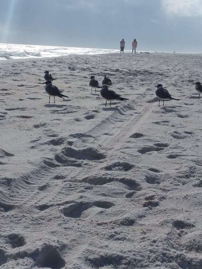 SEAGULLS ENJOYING THE BEACH royalty free stock image
