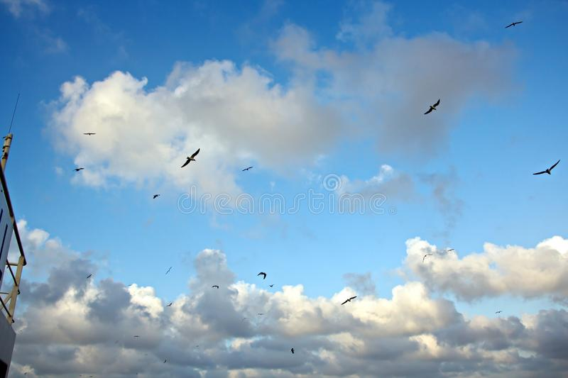Seagulls and birds hovering in the sky against a background of white and colorful clouds and a coastline. The flight and hovering of sea gulls in the blue sky stock photography