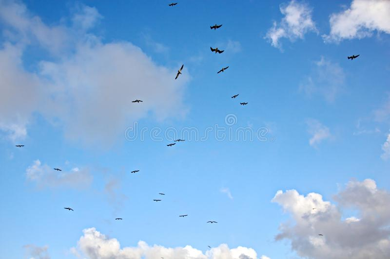 Seagulls and birds hovering in the sky against a background of white and colorful clouds and a coastline. stock images