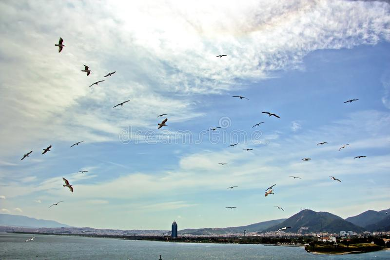 Seagulls and birds hovering in the sky against a background of white and colorful clouds and a coastline. royalty free stock photos