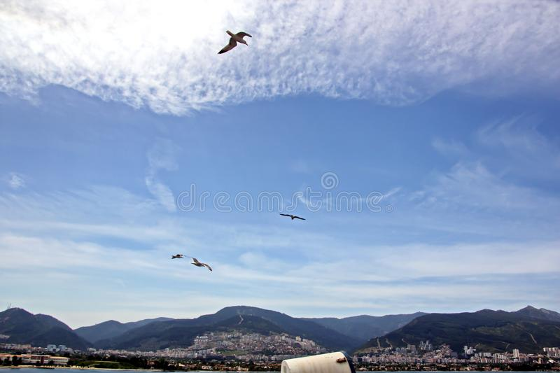 Seagulls and birds hovering in the sky against a background of white and colorful clouds and a coastline. royalty free stock images