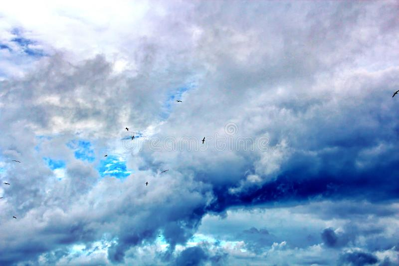 Seagulls and birds hovering in the sky against a background of white and colorful clouds and a coastline. royalty free stock image