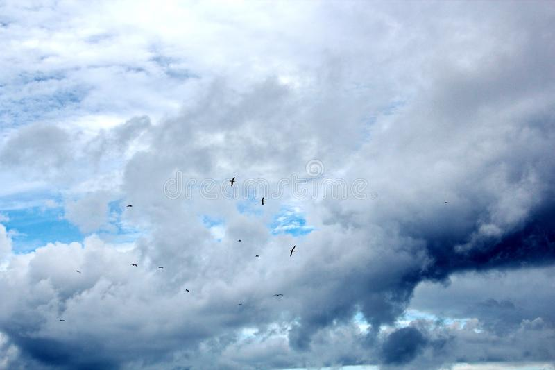 Seagulls and birds hovering in the sky against a background of white and colorful clouds and a coastline. stock photography