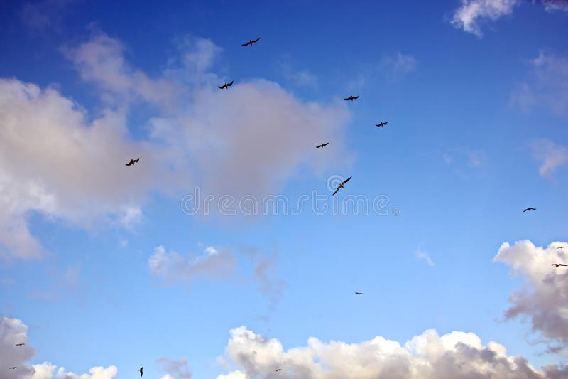 Seagulls and birds hovering in the sky against a background of white and colorful clouds and a coastline. The flight and hovering of sea gulls in the blue sky stock photos