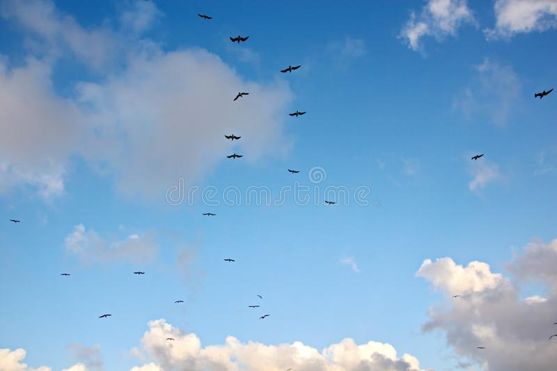 Seagulls and birds hovering in the sky against a background of white and colorful clouds and a coastline. stock photo