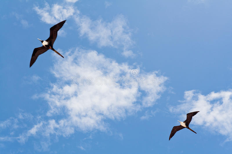 Download Seagulls on a Blue Sky stock photo. Image of white, wings - 24150608