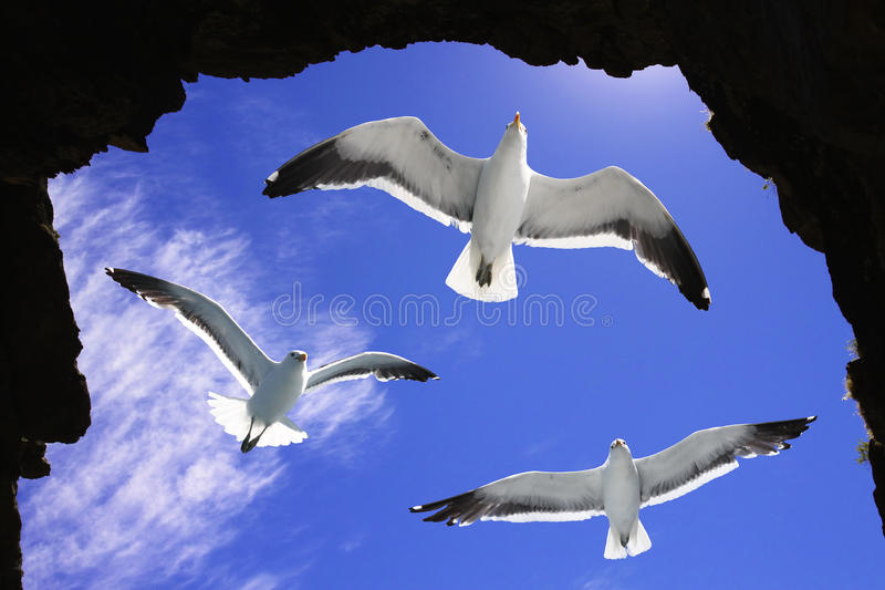 Seagulls in a cave royalty free stock image