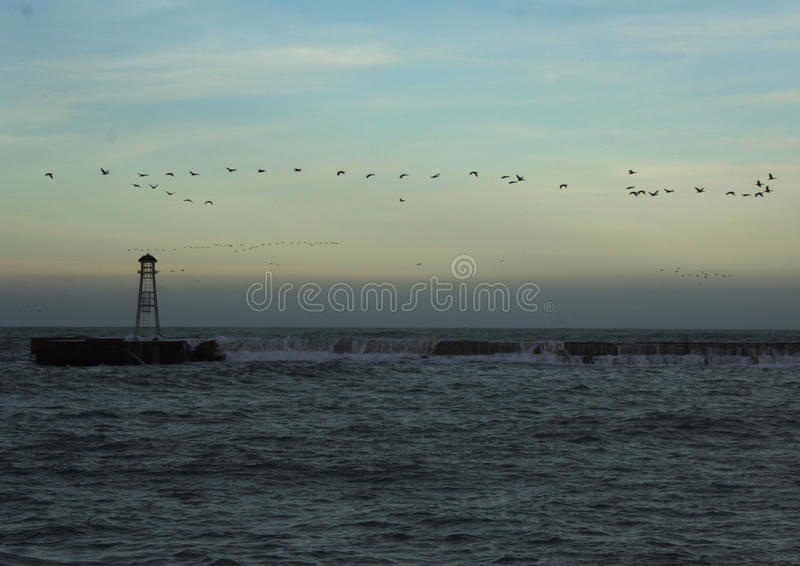 Download Seagulls And Crashing Waves Stock Image - Image: 28727841