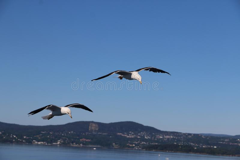 Seagulls czeka niektóre karmowego latanie wokoło łodzi obrazy stock
