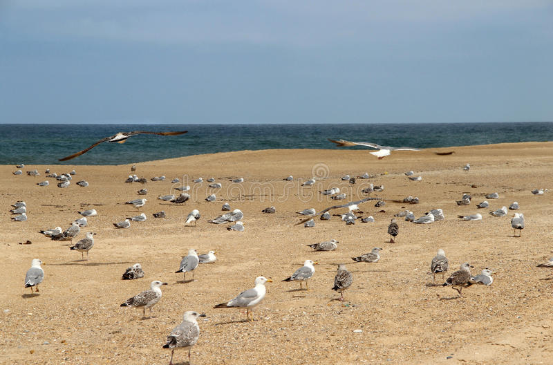 Seagulls on the empty beach