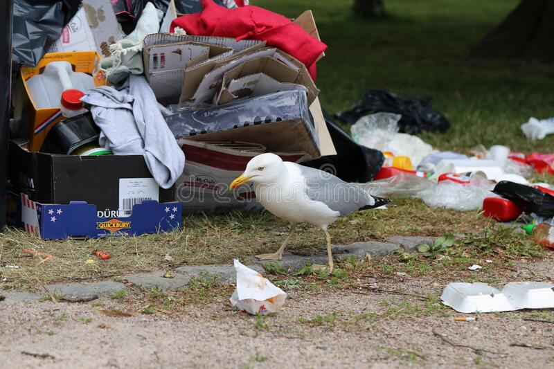 Seagulls Exploring Colorful Trash after Pride Parade in Helsinki stock images