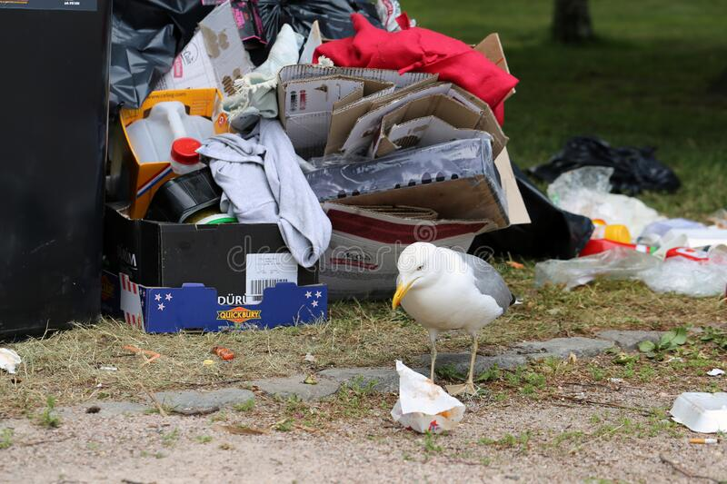 Seagulls Exploring Colorful Trash after Pride Parade in Helsinki royalty free stock photography
