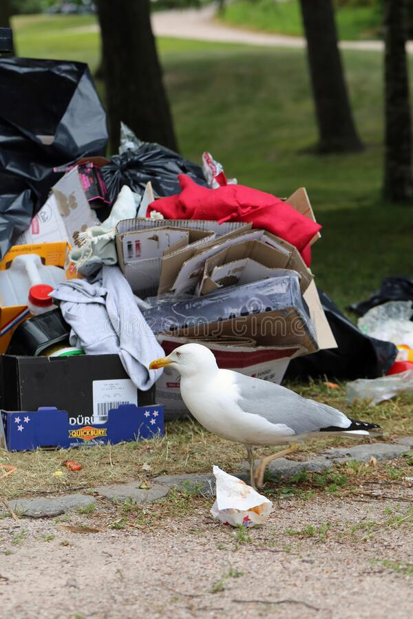 Seagulls Exploring Colorful Trash after Pride Parade in Helsinki stock image