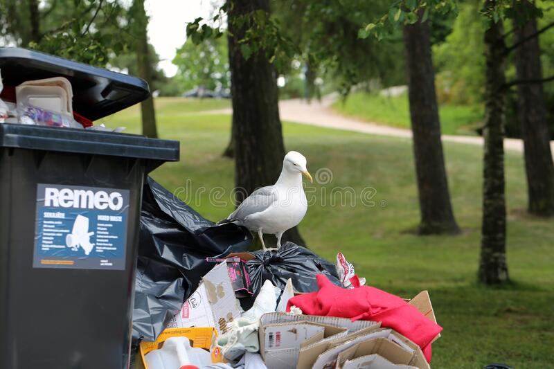 Seagulls Exploring Colorful Trash after Pride Parade in Helsinki stock photography