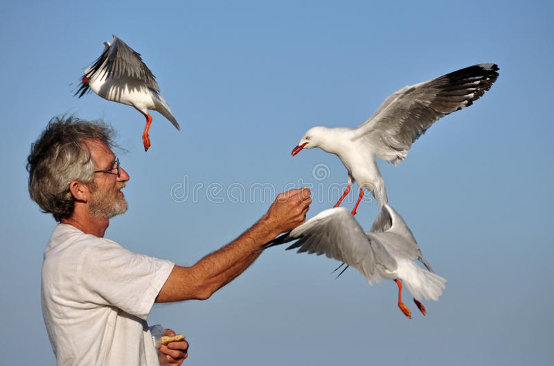 Download Seagulls Feeding From Hand Of Man On Beach Stock Image - Image of business, happy: 26576181