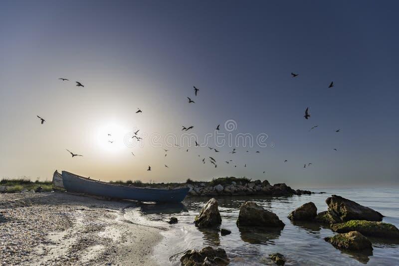 Seagulls feeding in the morning over fishermen boat stock image