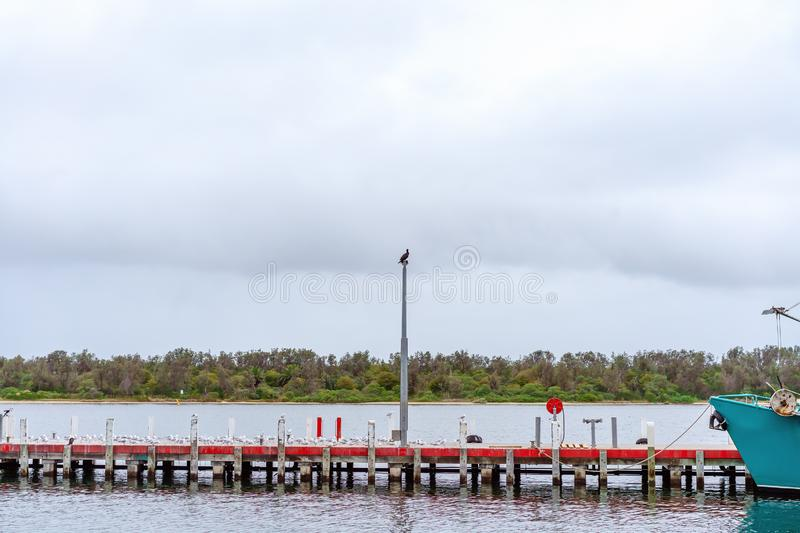 Seagulls Flocking To Rest On A Jetty. Many seagulls perching on a jetty with a cormorant up a pole on an Australian river royalty free stock image