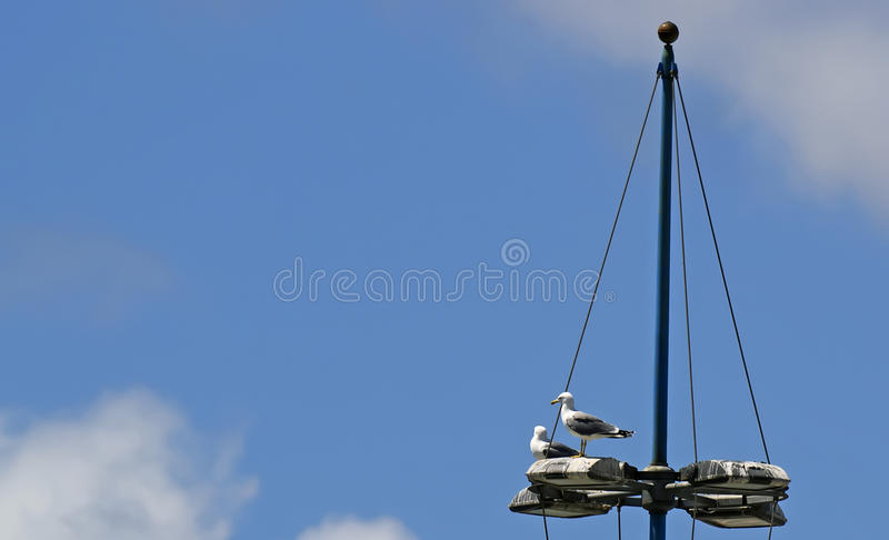 Download Seagulls On A Floodlight Pole Stock Photo - Image of nature, bird: 24733876