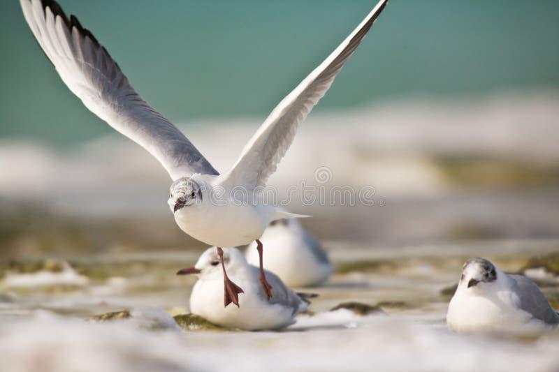 Seagulls fly stock photo