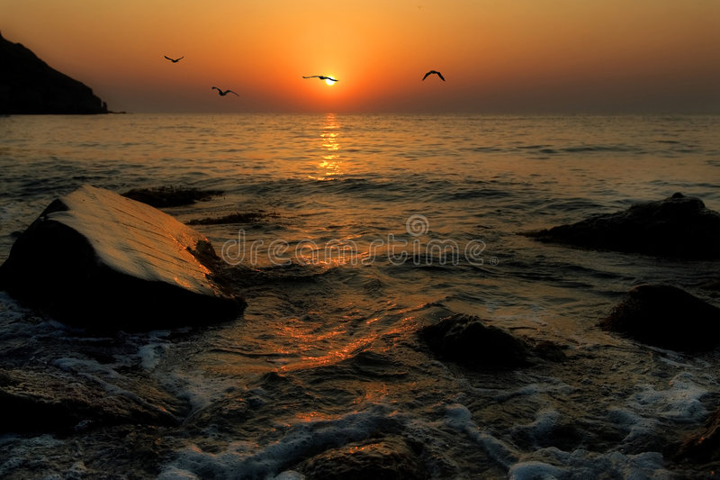 Seagulls fly against a rising sun royalty free stock photos
