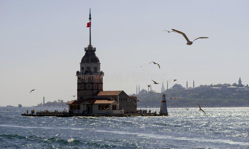 Seagulls fly over the Bosphorus Strait near the Maiden Tower in the background of the Blue Mosque. stock image