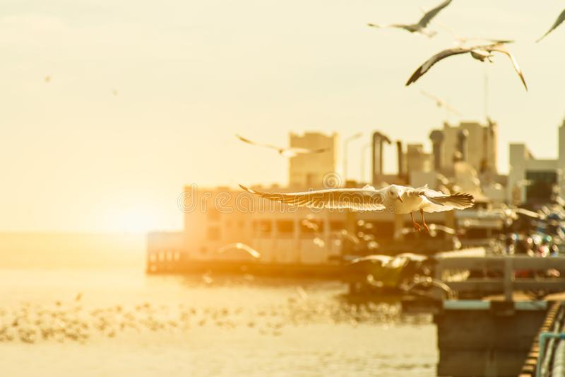 Seagulls flyger i den gula solnedgånghimlen med täta moln, arkivbild